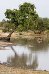 Lampi savannilla