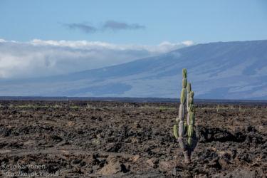 Maisemaa Isabela -saarella