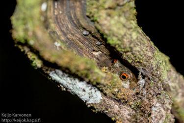 Sammakko puunkolossa