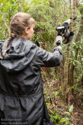 Indri (Indri indri), Andasibe