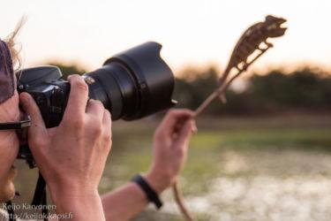 Luontokuvaaja työssään
