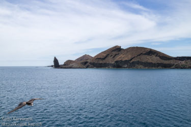 Keisarifregattilintu (Fregata magnificens), Isla Bartolome