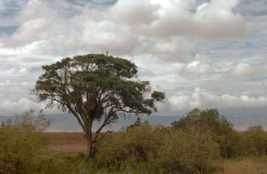Ngorongoro_HDR6