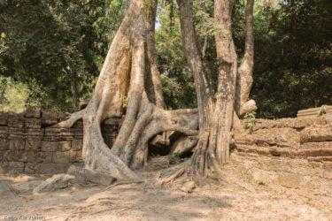 Ta Prohm -temppeli (viidakkotemppeli), Siem Reap/Kamputsea