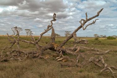 Serengeti_HDR11
