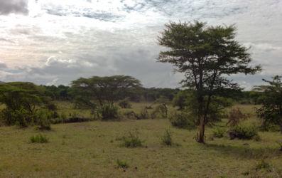 Serengeti_HDR3