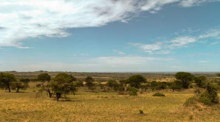 Serengeti_HDR8