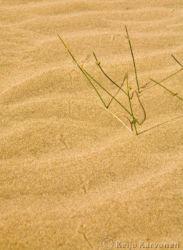 aavikko01