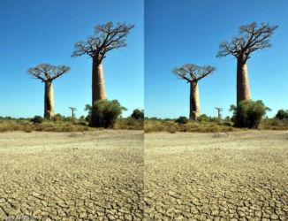 baobab_avenida_1