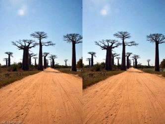 baobab_avenida_2