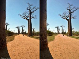 baobab_avenida_3