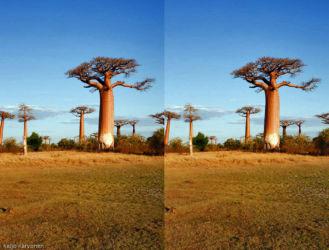 baobab_avenida_4