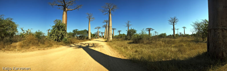 baobab_avenue_panorama