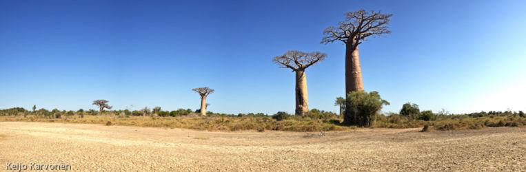 baobab_panorama