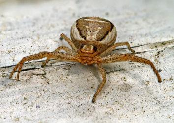 Hämähäkki (photo stacking -harjoitus)
