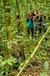 Simpanssi ja kuvaajat