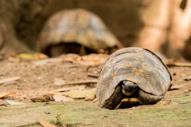 Kilpikonna matelijapuistossa
